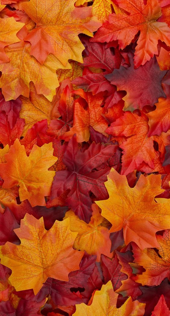 Vì sao lá cây đổi màu và chuyển đỏ?