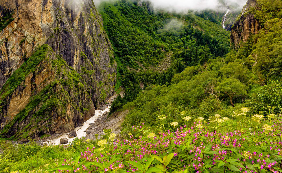 Thung lũng hoa (Valley of Flowers), Uttarakhand, Ấn Độ