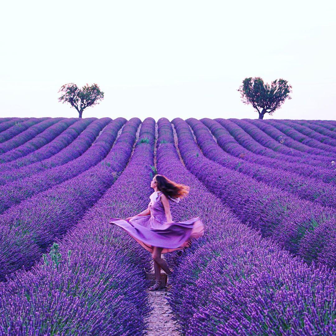 Valensole France, Provence, Pháp