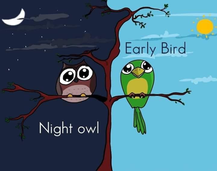 Tại sao có những người chỉ làm việc vào buổi sáng, cũng có những người chỉ sáng tạo lúc nửa đêm?