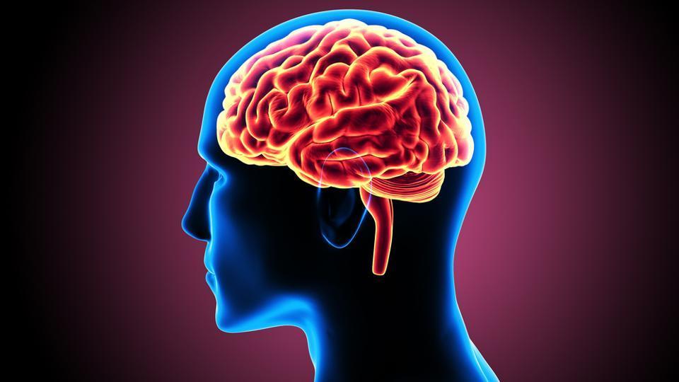15 sự thật khoa học đầy thú vị về bộ não