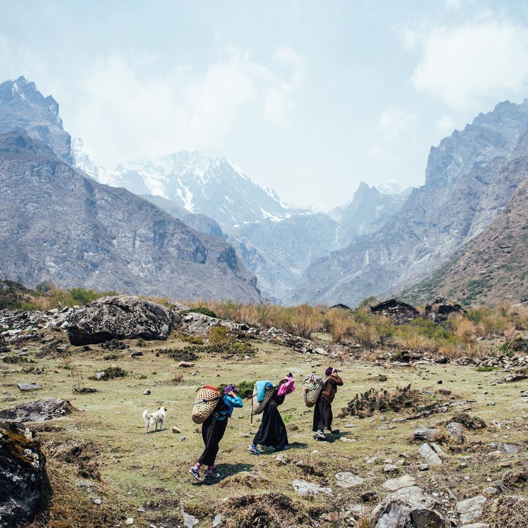 Người dân Nepal trên đường thu hoạch nấm Yarsagumba trên những vùng đổng cỏ trên dãy núi Himalaya vào tháng 5 và 6 hàng năm, Manaslu, Nepal