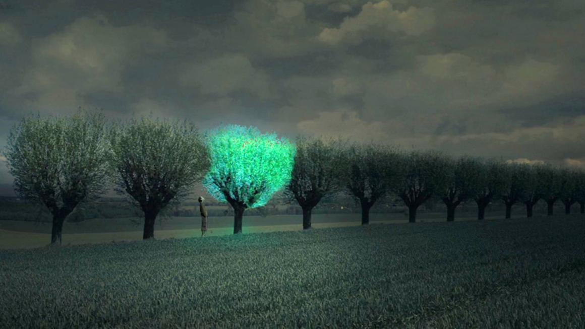 Bạn nghĩ sao nếu cây xanh có thể phát sáng như đèn đường?