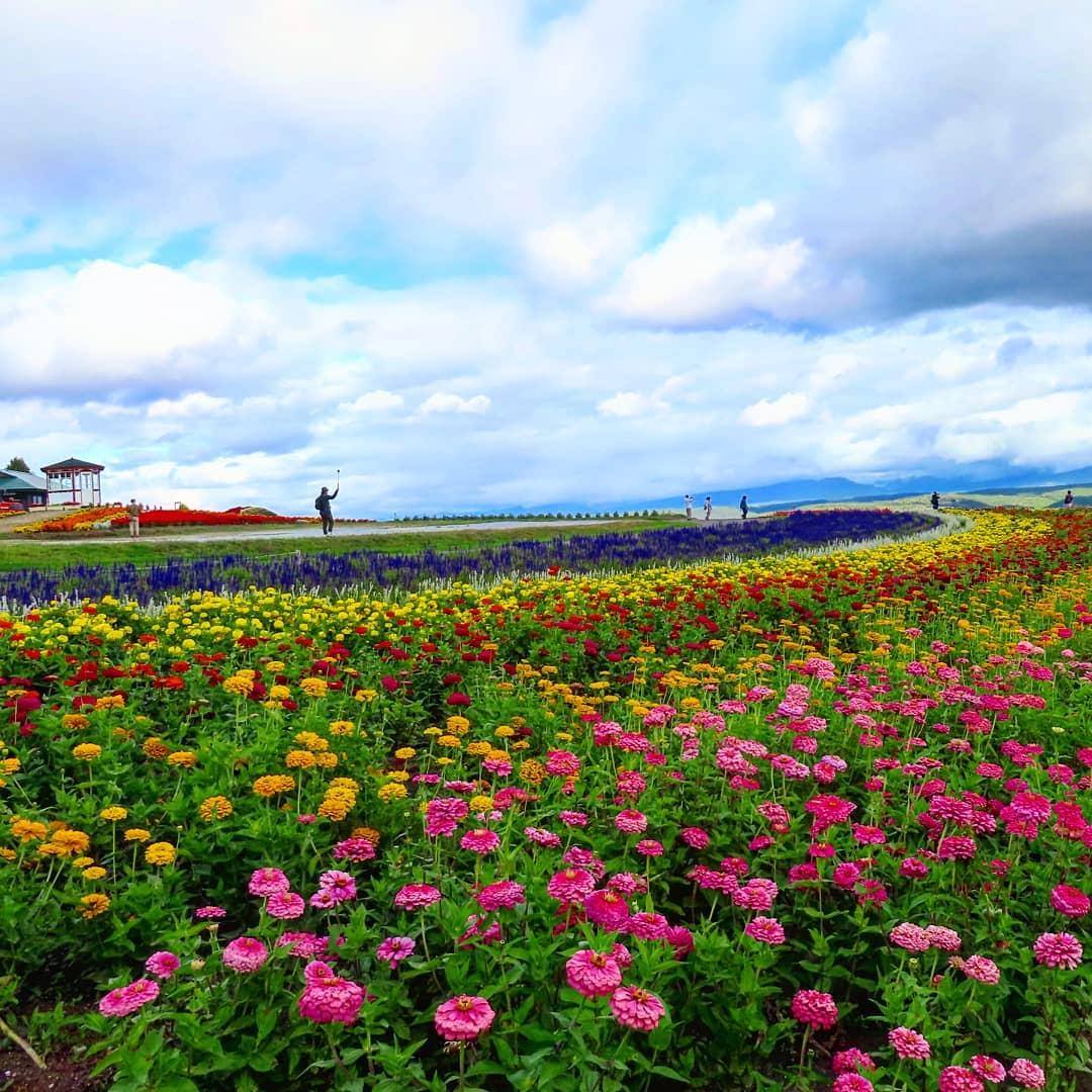 Flowerland Kamifurano, Furano, quận Hokkaido, Nhật Bản