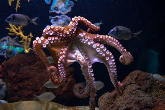 Xúc tu của bạch tuộc có nhận thức riêng của chúng