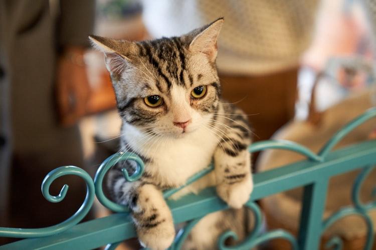 8 yếu tố góp phần tạo nên tính cách của mèo