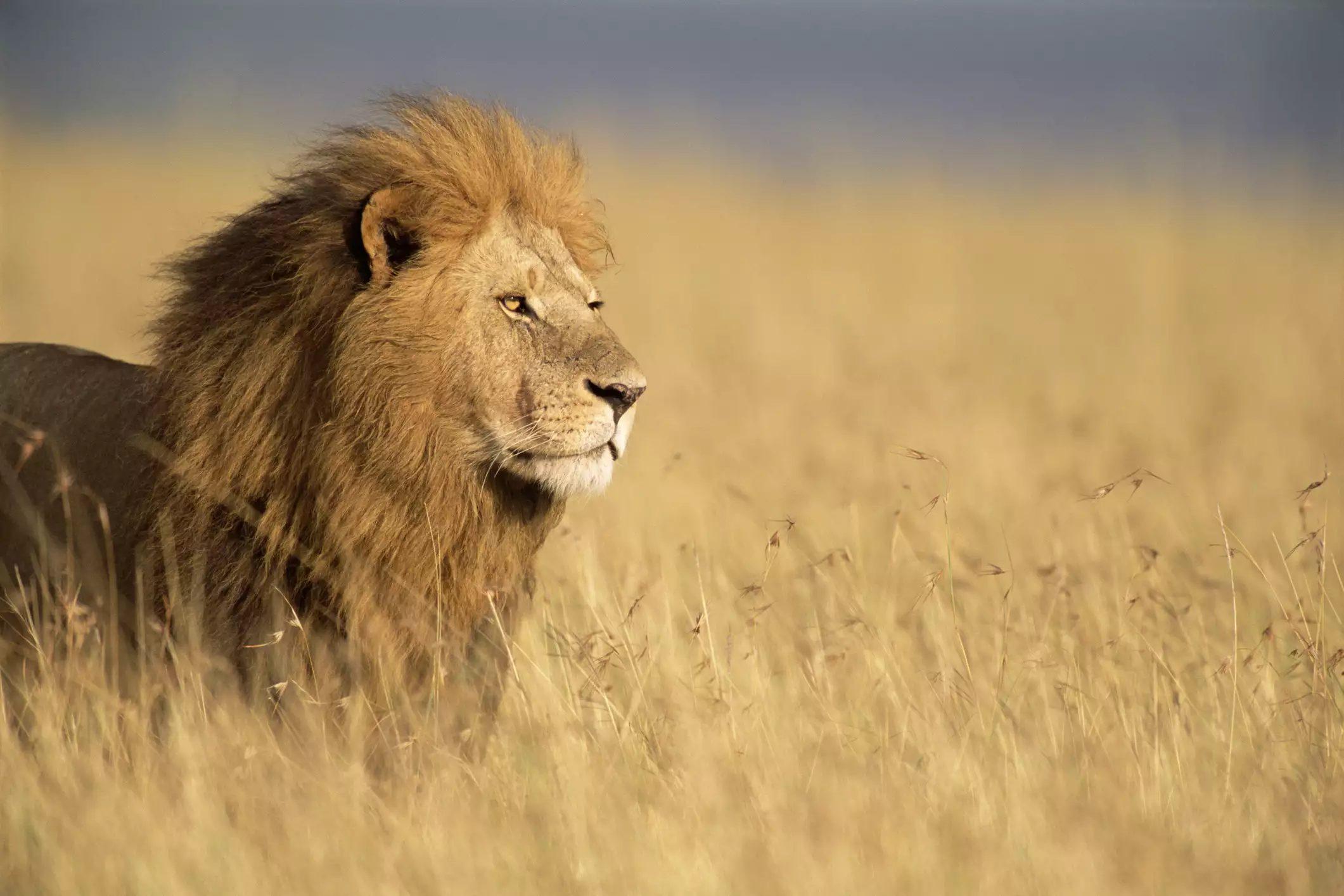 15 loài động vật nhanh nhất hành tinh